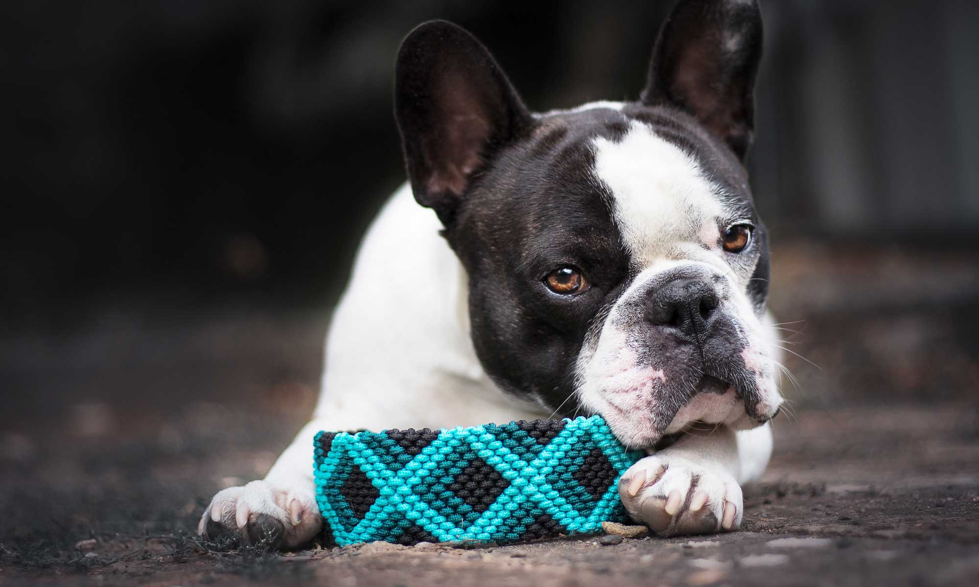 Maßgeschneiderte Hundehalsbänder