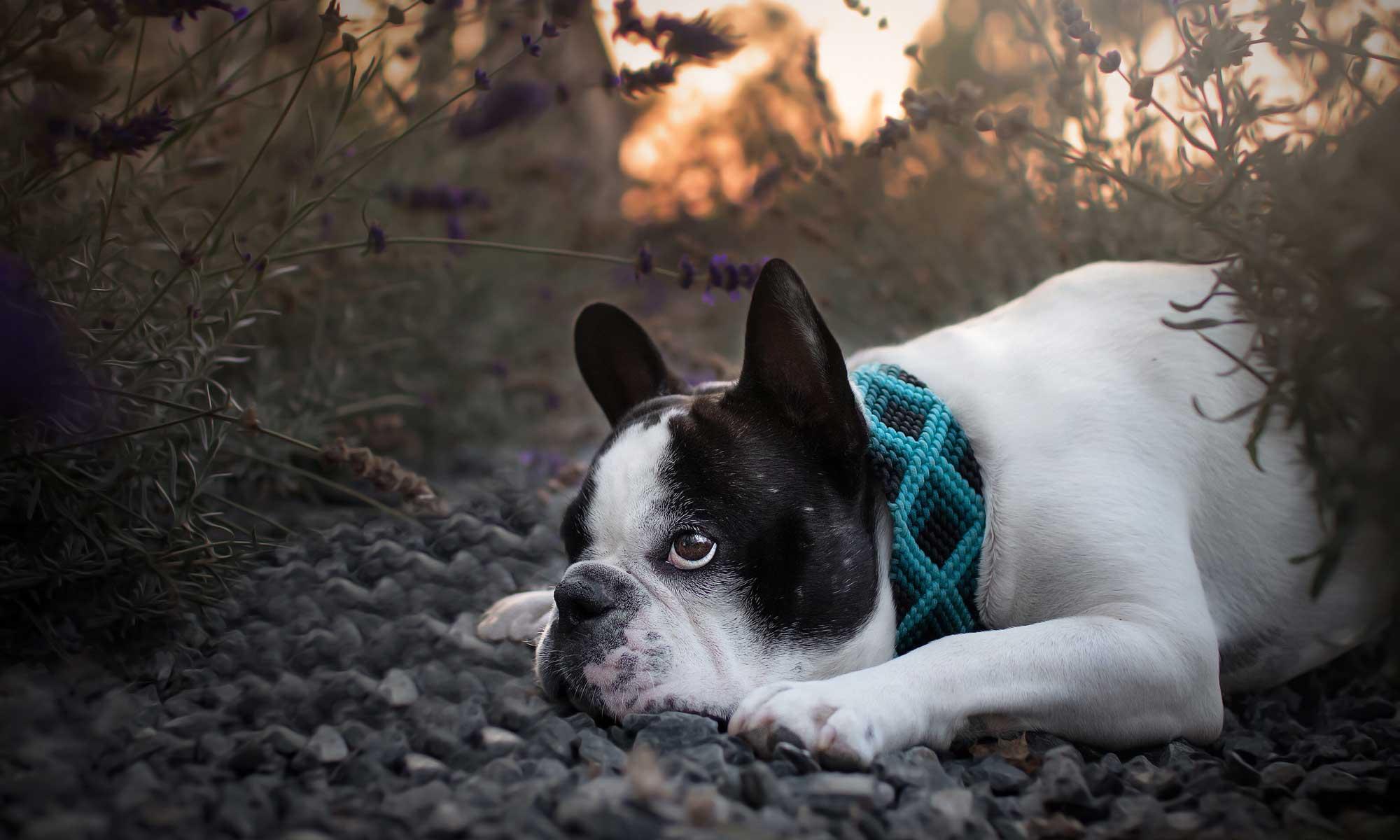 Onlineshop für Hunde-Zubehör